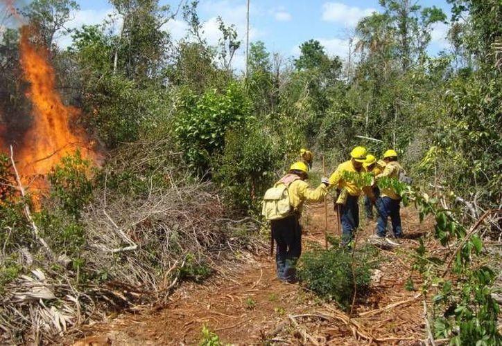 En el combate del incendio de Bacalar participan 49 técnicos de la Conafor y voluntarios. (Cortesía/SIPSE)