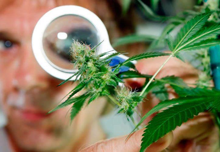 El gobierno también especificó el procedimiento de obtención de licencias para el acceso seguro e informado de la semilla. (López Dóriga).