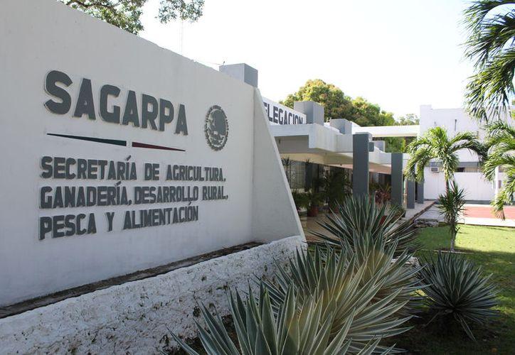Informan que no hay fecha tentativa para que entre en funciones, pues esperan la nueva visita del personal de Senasica. (Joel Zamora/SIPSE)