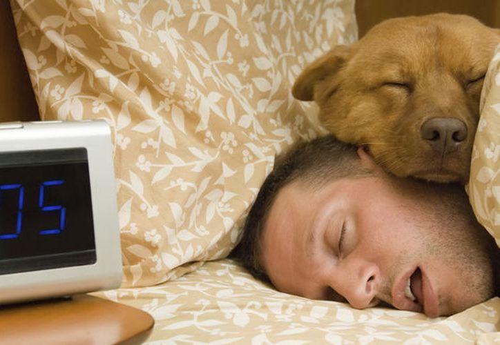 Alrededor del 60% de los propietarios de perros declara que ha dormido con su mascota alguna vez. ()