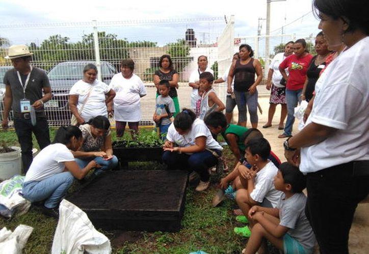 Realizan cultivos de frutas y verduras con técnicas de invernadero. (Milenio Novedades)