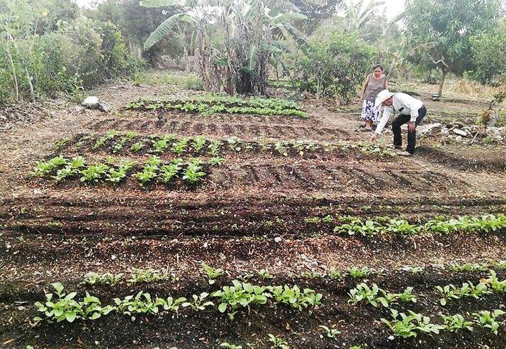 Responden a la solicitud de las mujeres del área rural que han planteado la necesidad de contar con insumos para desarrollar alguna actividad en sus hogares. (Javier Ortiz/SIPSE)