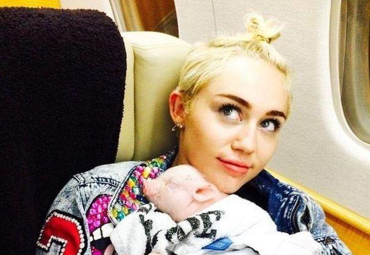 Miley Cyrus salió retratada en la revista Paper Magazine con una cerda y en algunos casos sin ropa. Esta gráfica corresponde a dicha publicación. (baindaily.com)