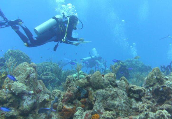 En municipios como Cozumel y Puerto Morelos el arrecife mostraba un estado de salud crítico. (Archivo/SIPSE)