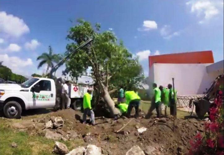 """El primer """"Árbol de la Paz"""" fue sembrado frente al planetario Sayab de Playa del Carmen. (Redacción/SIPSE)"""