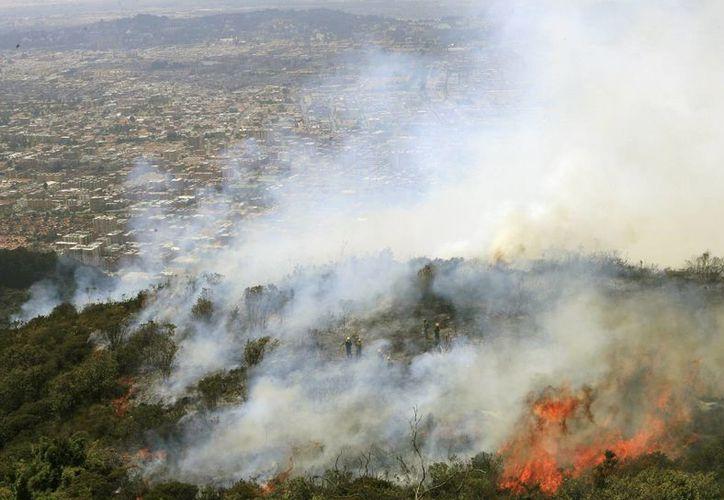Los incendios forestales en Colombia han cobrado, hasta el momento, la vida de una persona. (EFE)