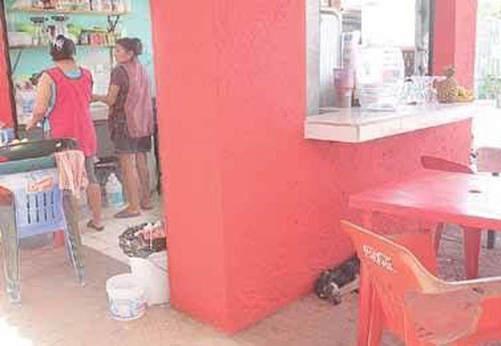 Los perros se acercan a los locales de alimentos, como los que venden antojitos y las carnicerías. (Redacción/SIPSE)