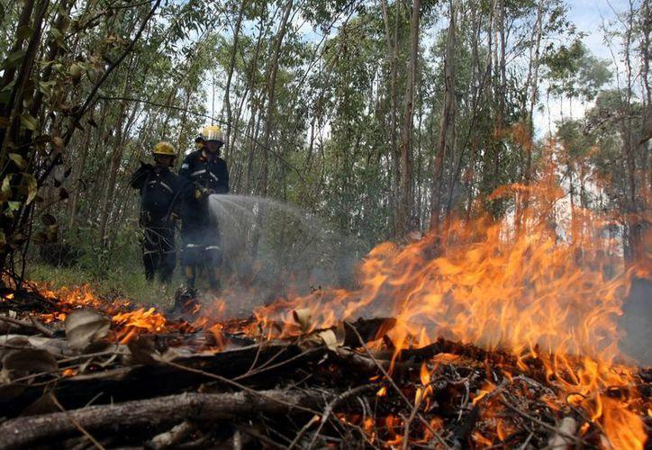En tan sólo tres días, se han quemado 99 hectáreas en todo el país. (EFE)