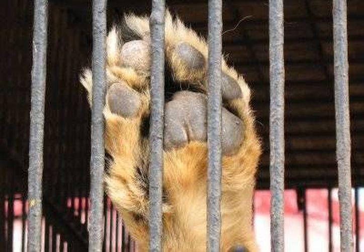 El acceso al municipio para los circos que tienen en los animales su mejor espectáculo, está cerca de ser cerrado. (Foto de Contexto/Internet)