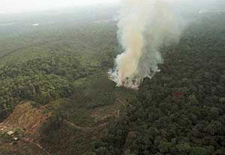 El ritmo de la deforestación de la Amazonia en Brasil   ha disminuido. (Archivo AP)
