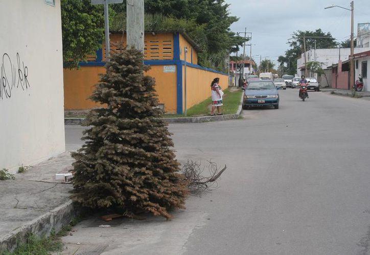 En la colonia Adolfo López Mateos fue abandonado en la vía pública un árbol navideño. (Julián Miranda/SIPSE)