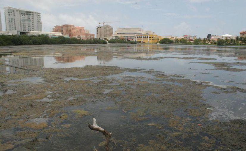 Investigarán los problemas relacionados con el medio ambiente. (Tomás Álvarez/SIPSE)