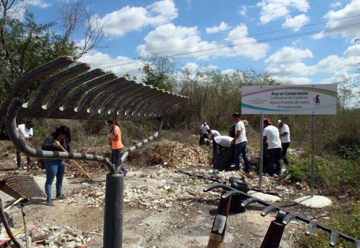 Ocho personas están encargadas de la vigilancia en la Reserva Cuxtal. (Foto: Milenio Novedades)
