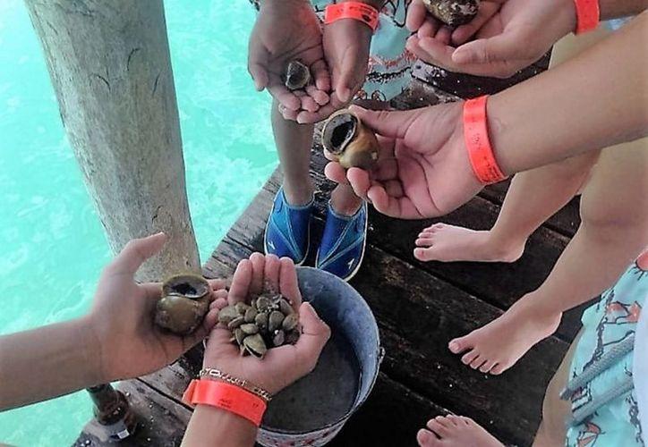 La norma publicada puede ser aprovechada por depredadores para extraer el molusco sin restricciones. (Javier Ortíz/SIPSE)
