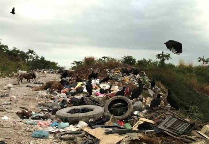 El tiradero a cielo abierto genera un riesgo fuerte de contaminación. (Carlos Horta/SIPSE)