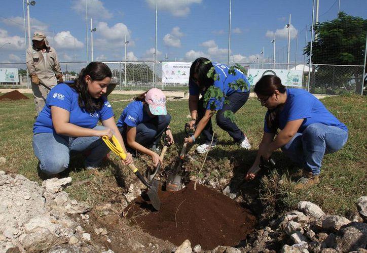 Universitarios y representantes de varias empresas contribuyeron este miércoles a reforestar el Paseo Verde en el marco de la Semana del Voluntariado 2015. (Fotos: César González/SIPSE)