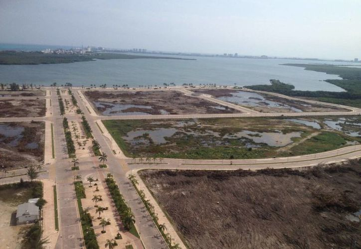 Semarnat precisa que en el Malecón Tajamar no hay devastación; reubicarán a los cocodrilos. (Luis Soto/SIPSE)