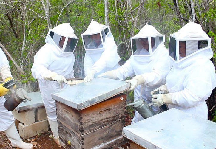 ¿Turistas apicultores? En Yucatán, hay un sitio en donde puedes alimentar a las abejas y conocer todo el proceso de producción de la miel. (SIPSE)
