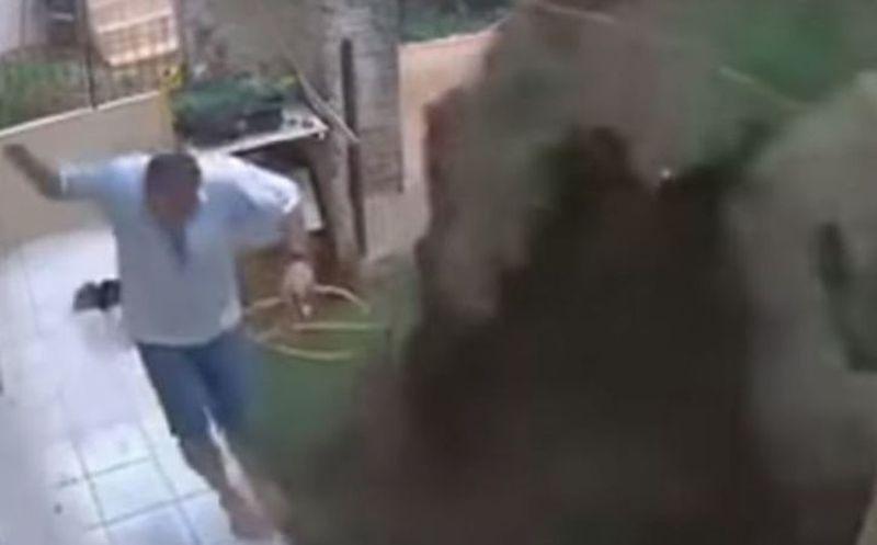 Hay talento... Hombre explota su jardín para eliminar plaga de cucarachas