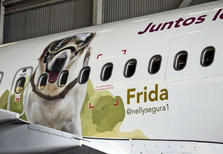 En el avión Airbus A320, se observa imagen de la perrita rescatista Frida. (Foto: Notimex)