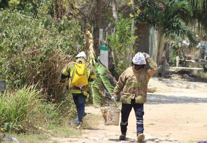 Con el traje especial de apicultor los bomberos ingresaron al área verde y con el apoyo de una bomba con líquido especial. (Redacción/SIPSE).