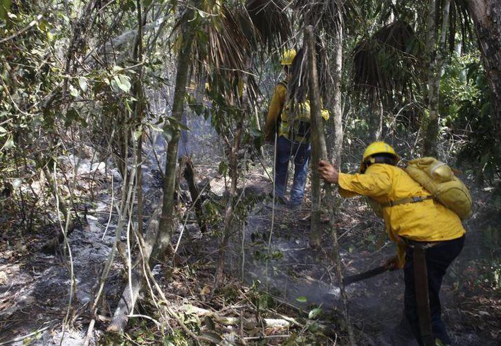 La Comisión Nacional Forestal, reportó que las llamas fueron apagadas en su totalidad. (Israel Leal/SIPSE)