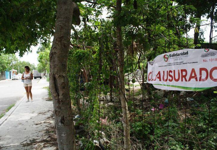 Las autoridades colocaron tres sellos de clausura en un predio de la colonia Ejidal en donde se taló un chicozapote. (Octavio Martínez/SIPSE)
