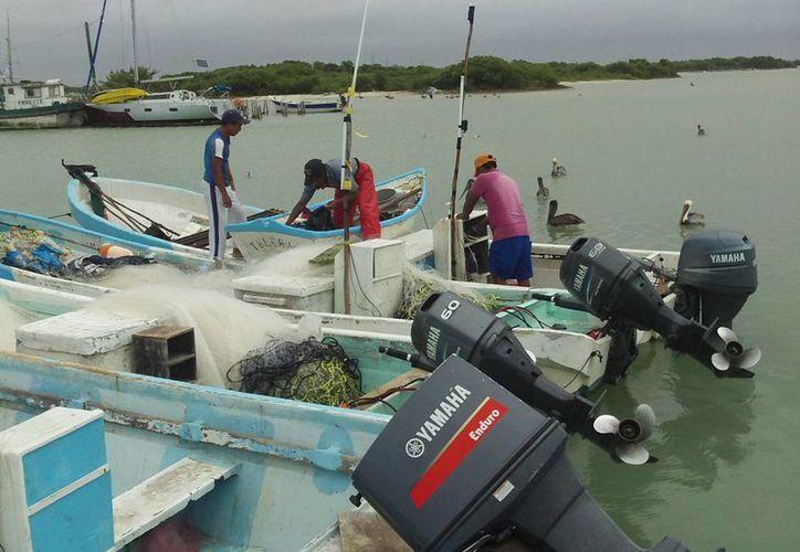 En el actual padrón aparecen 12 mil pescadores yucatecos en 25 comunidades. (Milenio Novedades)