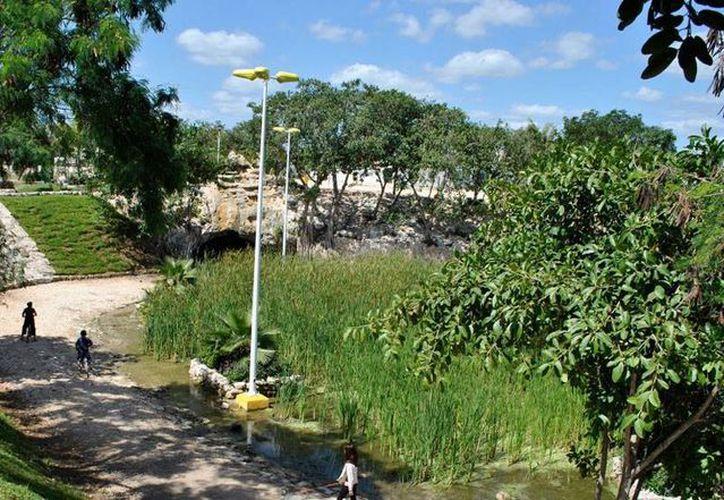 El Parque del Cenote, ubicado en la Región 230, cuenta con un cenote y una de las leyendas de aluxes de Cancún. (Contexto/Internet)
