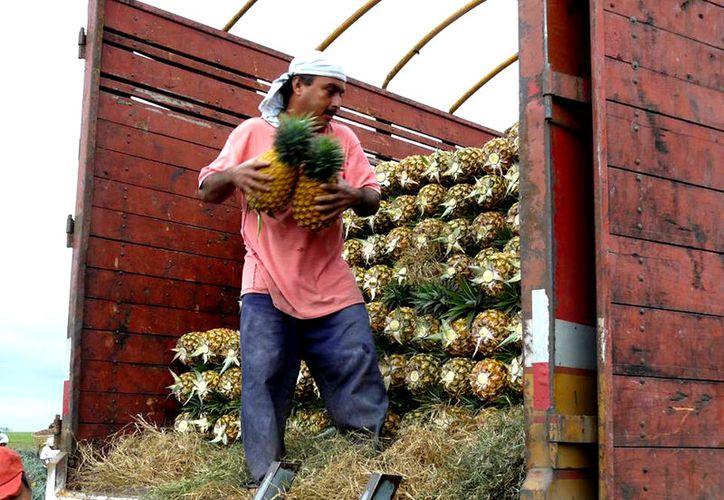 4,500 botellas de vino a base de miel orgánica produce al año el pequeño empresario Agripino Rodríguez. (Foto: Javier Ortiz / SIPSE)