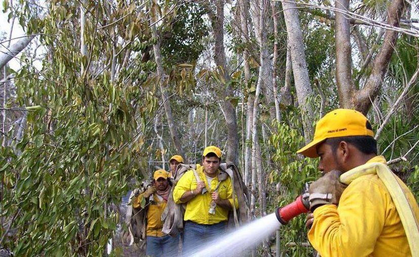 En lo que va de la temporada suman ocho los incendios forestales liquidados en la entidad. (Omar Capistrán/SIPSE)