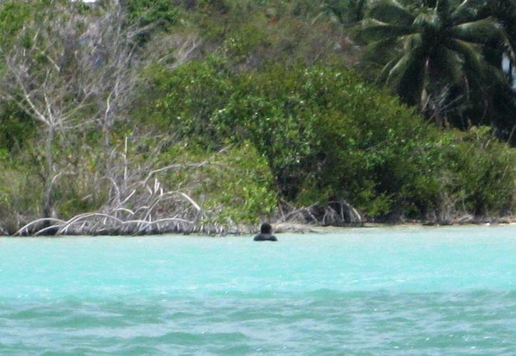 Se pretendió incentivar a los ejidos que contaran con paisajes y atractivos naturales. (Javier Ortiz/SIPSE)