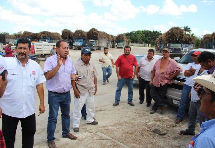 Los productores de la ribera del río Hondo suspenden actividad al detectar caña proveniente de Bacalar. (Carlos Castillo/SIPSE)