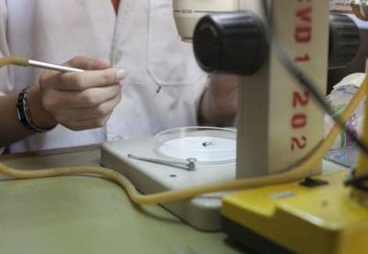 La vacuna contra el dengue logró ser desarrollada tras 20 años de investigación. (Milenio)
