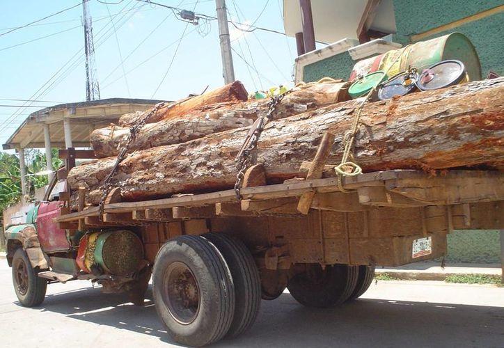 Aseguró la Profepa 150 metros cúbicos de madera. (Israel Leal/SIPSE)