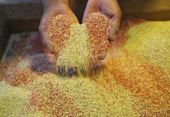 Debido a sus propiedades alimenticias, la quinoa es considerada la esperanza para la alimentación de la humanidad. (El Financiero)