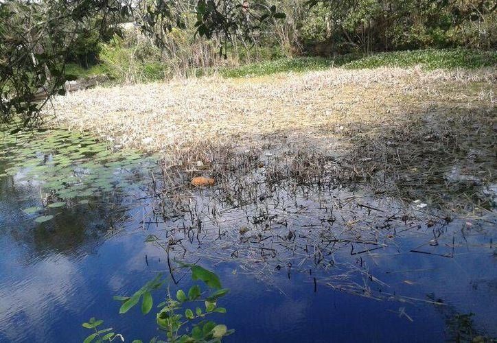 La próxima semana un par de buzos explorará el cenote. (Sergio Orozco/SIPSE)