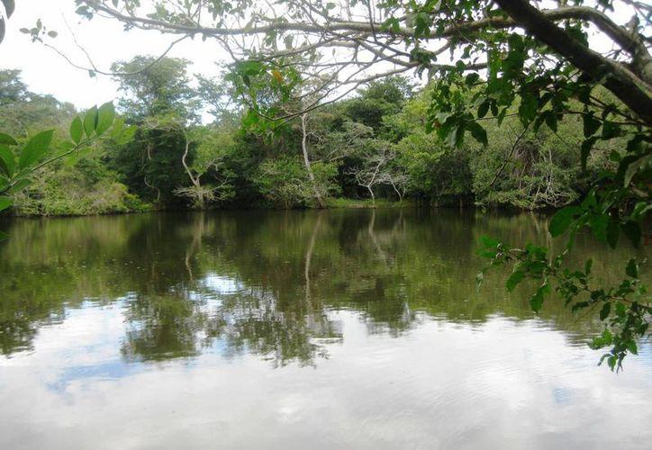 Hay zonas en comunidades bacalarenses que no han sido exploradas más que por los habitantes de la región. (Javier Ortiz/SIPSE)