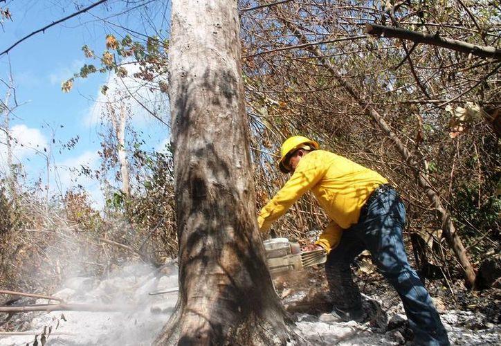 Los tres incendios reportados han sido atendidos de manera oportuna. (Edgardo Rodríguez/SIPSE)