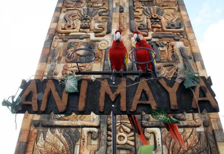 El recorrido del safari y el catamarán son algunas de las actividades gratuitas en el Animaya. (Milenio Novedades/Foto de contexto)