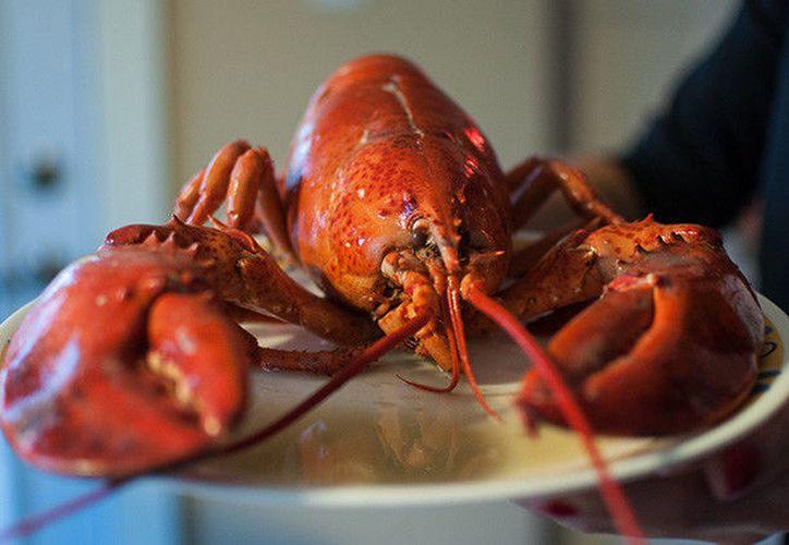 Diversos restaurantes y supermercados ya han puesto en práctica otro sistema de conservación para los crustáceos. (RT)