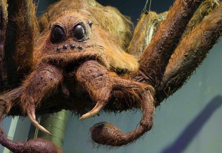 Por sus ojos y largas patas el arácnido fue bautizado con el nombre de Lycosa Aragogi. (Foto: RT)