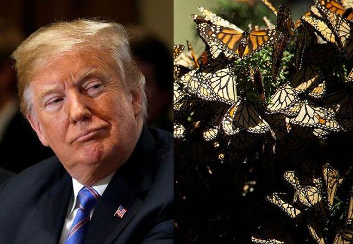 El gobierno de Donald Trupm propone  simplificar y mejorar la manera en que se aplica la Ley de Especies en Peligro de Extinción. (Excésior)