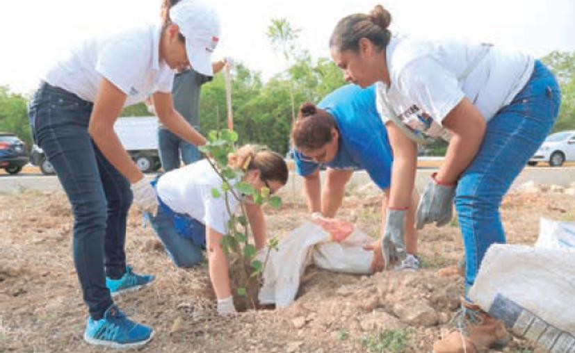 En este programa de reforestación participaron alumnos de la Universidad La Salle y personas que pertenecen al Voluntariado de la empresa Calica. (Contexto/Redacción).