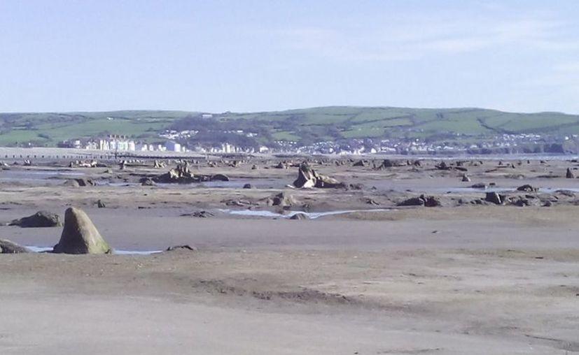 Un bosque prehistórico quedó al descubierto luego del paso de una fuerte tormenta en Reino Unido. (Facebook/David Mansell)