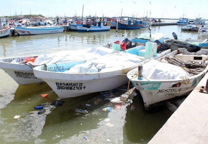 Se busca que más personas se unan al proyecto de rescate y limpieza de la Caleta y el Puerto de abrigo de Yucalpetén. Imagen de embarcaciones atracadas en el muelle de la zona. (Milenio Novedades)