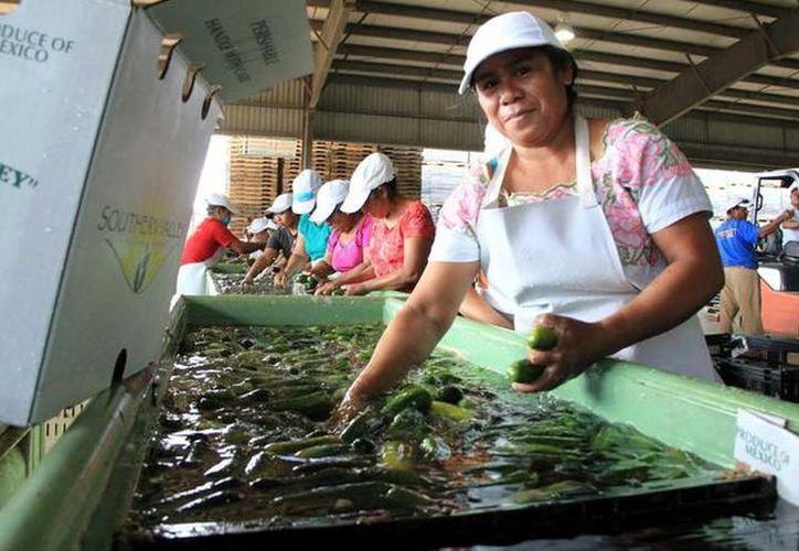 Prevén que acuerdo entre México y EU potencie a diversos sectores productivos. (Milenio Novedades)