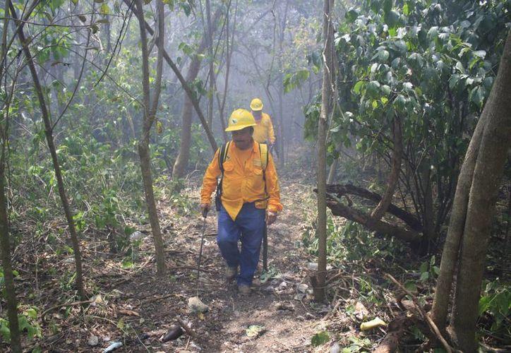 Prevén realizar un programa de verificación permanente de incendios forestales. (Harold Alcocer/SIPSE)