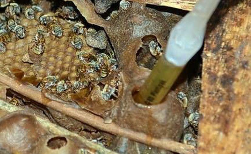 EL frío afecta la actividad de las abejas de manera sensible. (Archivo)