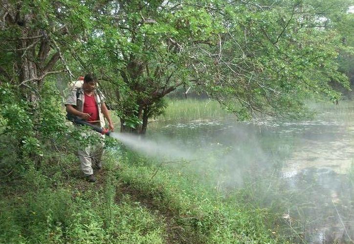 Estas acciones se realizan en las localidades: Tres Reyes, Pac Chen, Laguna Chabela, Banco de Cenotes, Nuevo Xcan, Nuevo Durango, entre otras. (Redacción/SIPSE)